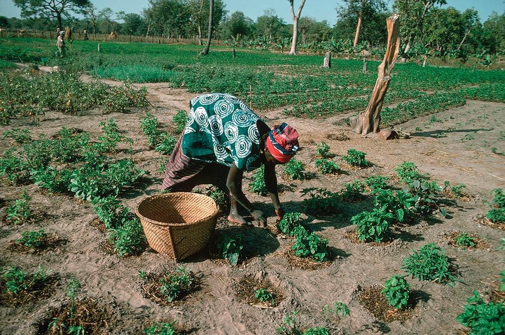 National Women Farmers Association
