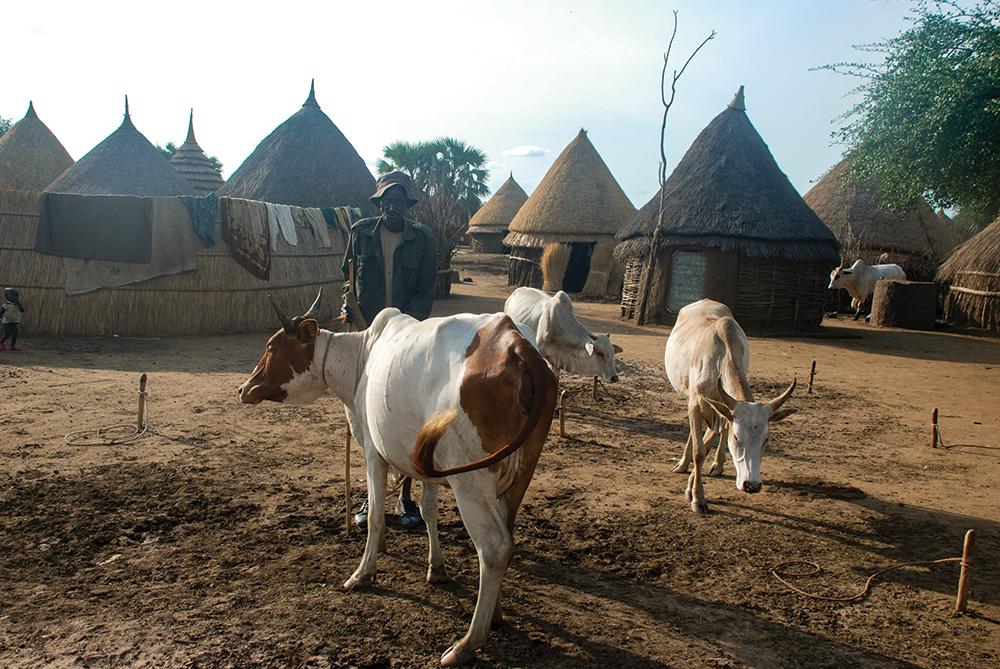 Nuer pastoralist settlement