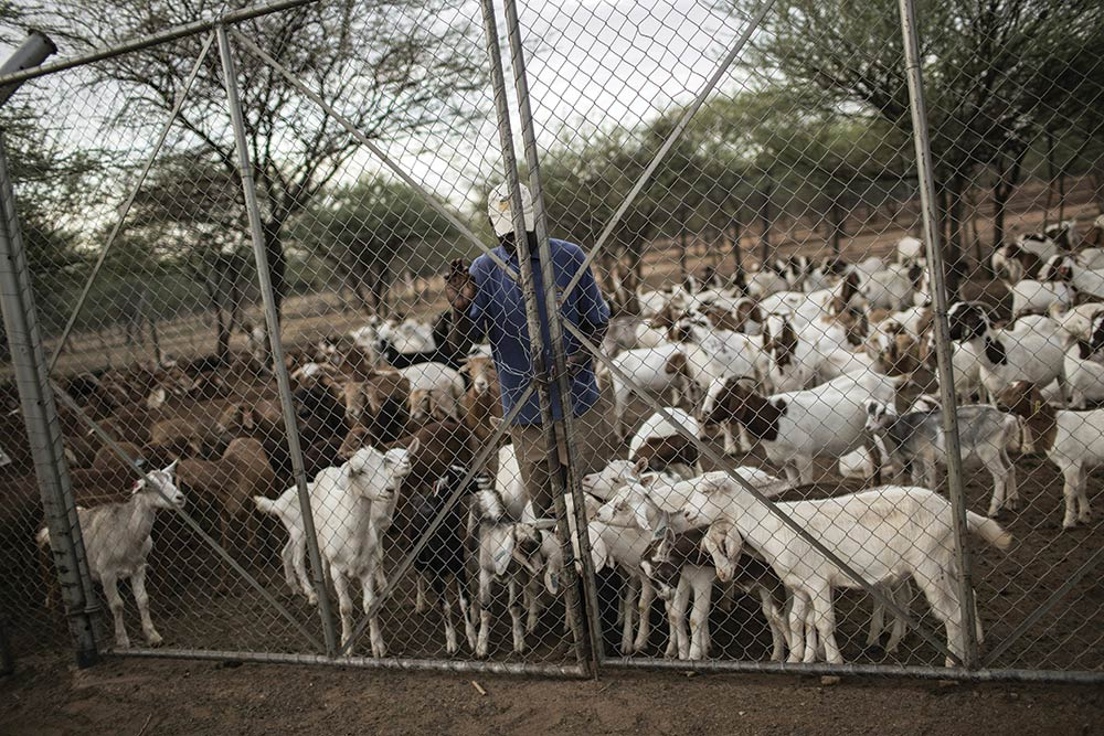 Livestock enclosures